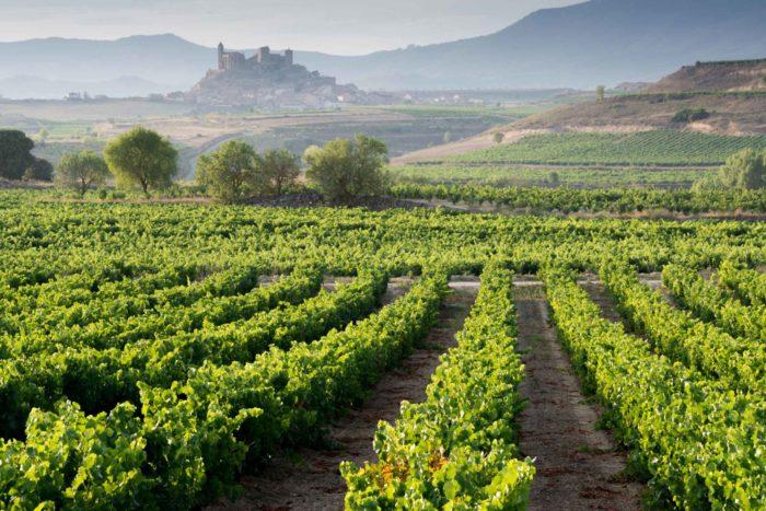 Especial Events Design - Rioja